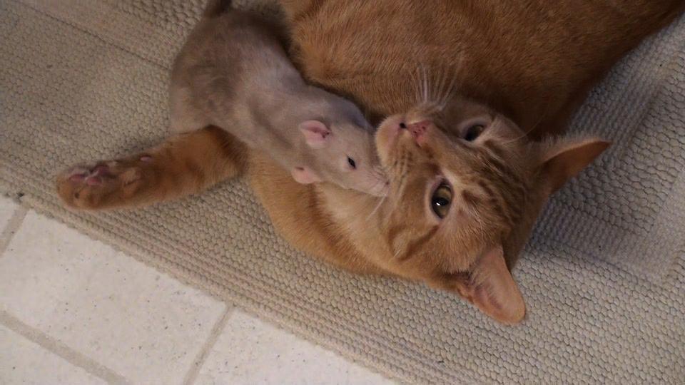 День, картинки кошки и мышки вместе