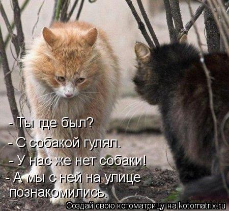 Хозяин двора животные,Истории из жизни,отношения,позитив