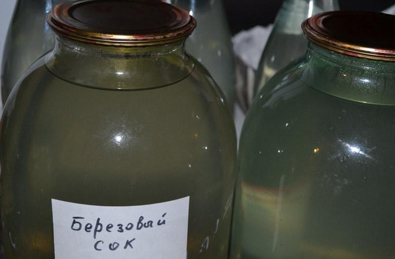 Правила сбора и хранения березового сока