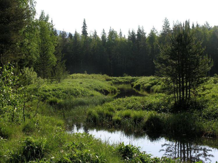 Большое моховое болото история, россия, ссср, урал, факты