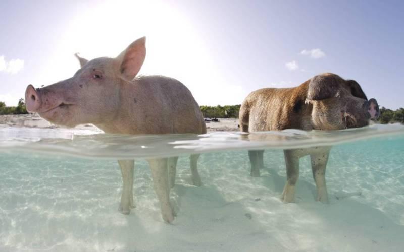 Острова, прославленные животными