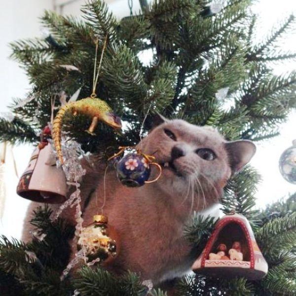 Новогодних котиков пост! И немного о безопасности питомцев в праздники домашние животные