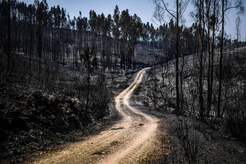 Сгоревший лес