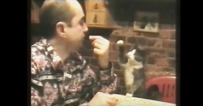 Кот пытается что-то сказать своему глухонемому хозяину на языке жестов. Просто поразительно!