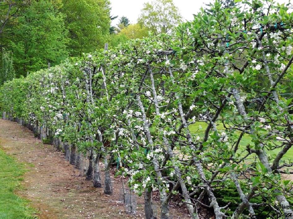 Потрясающий сад: площадь меньше, урожай — больше!
