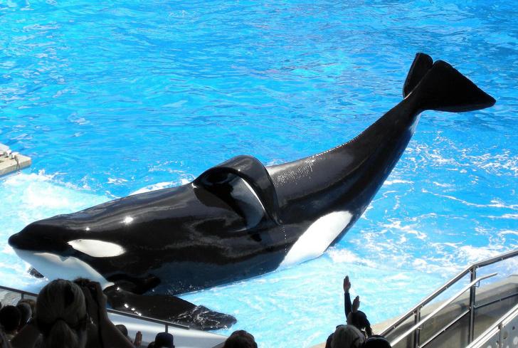 9 развлечений, от участия в которых стоит отказаться всем, кто любит животных