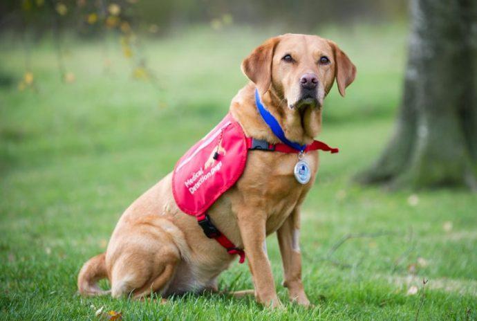 """""""Дейзи стала подарком небес…"""" Прямо сейчас такие собаки творят чудеса со здоровьем людей"""