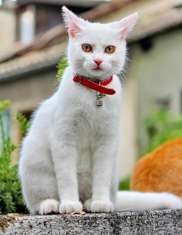 Что скажет о кошке ее окрас