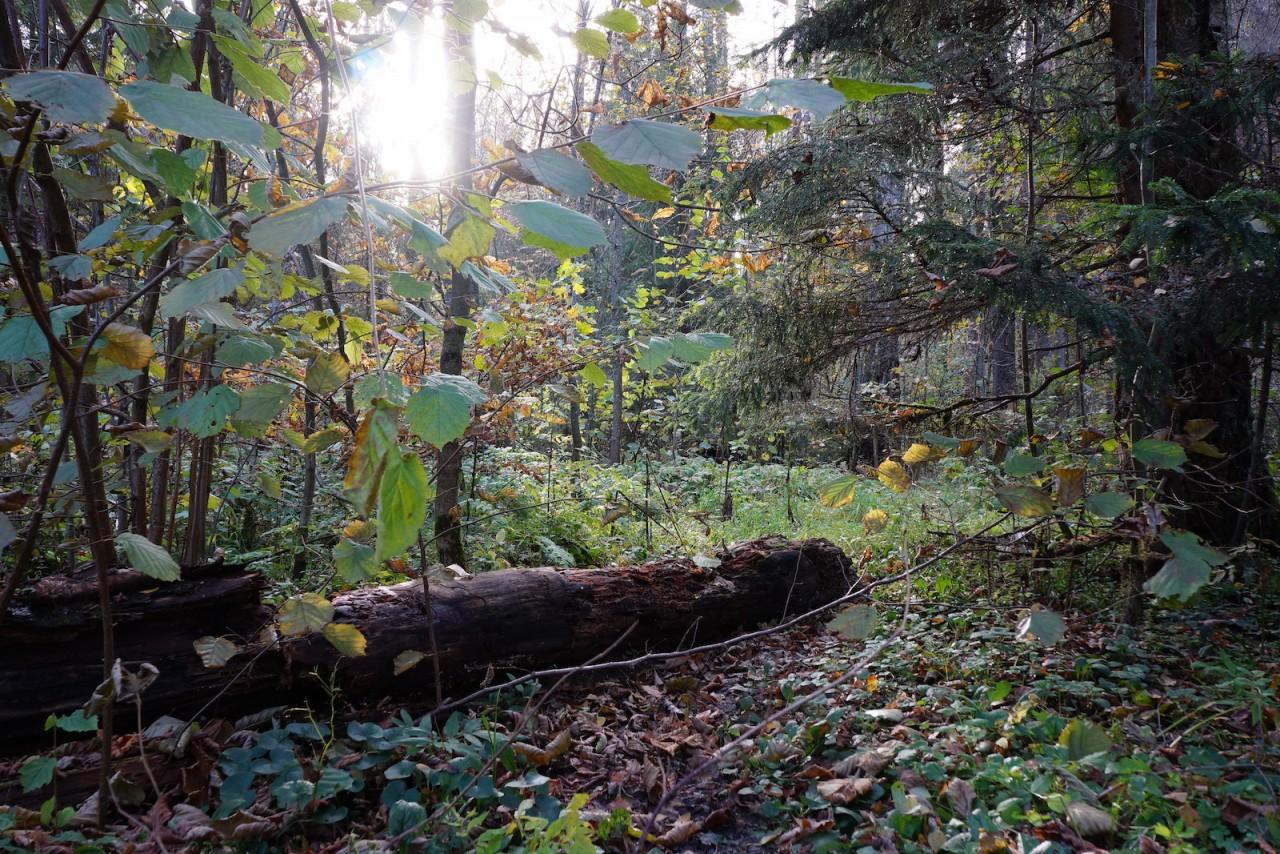 В сердце леса. красота, природа, россия