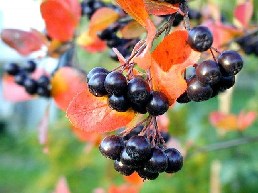 10 садовых культур, которые нельзя сажать в тени садоводство