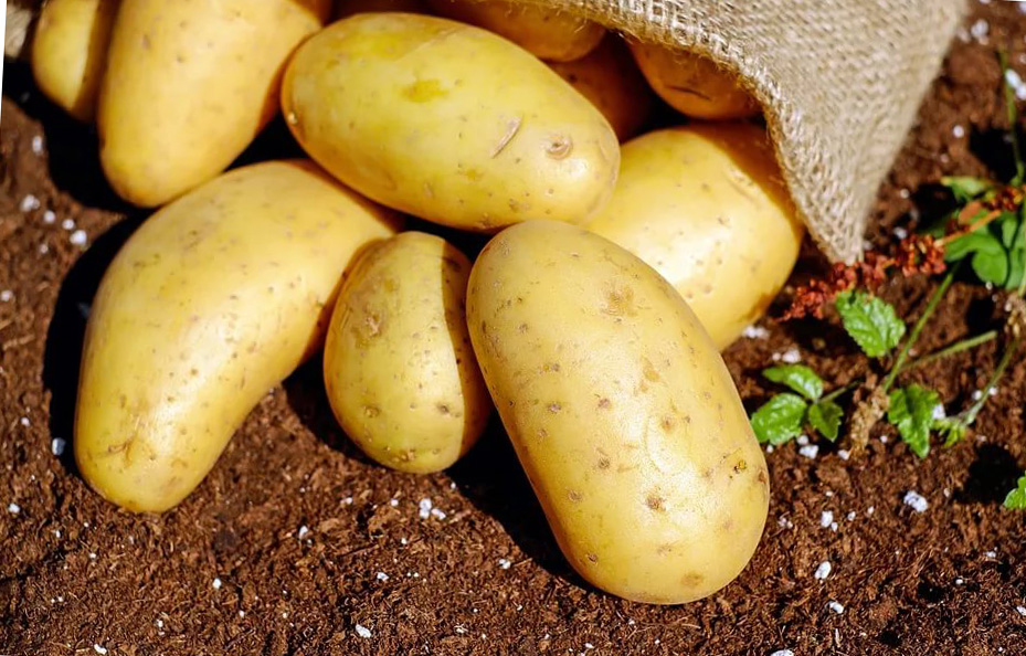 Борьба с картофельной нематодой: просто, как все гениальное!