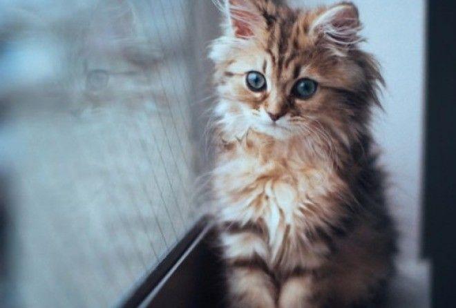 Посреди ночи я проснулся и увидел котенка…