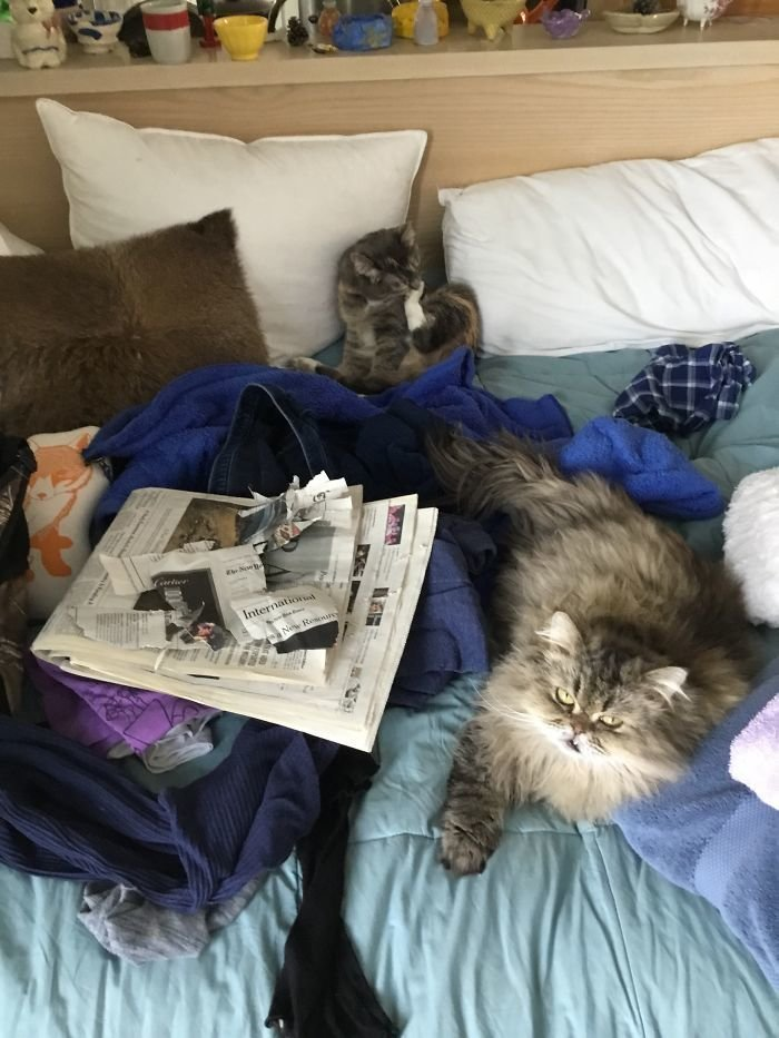 Какая еще утренняя газета? животные, кот, коты, кошки, приколы с животными, смешно, фото, юмор