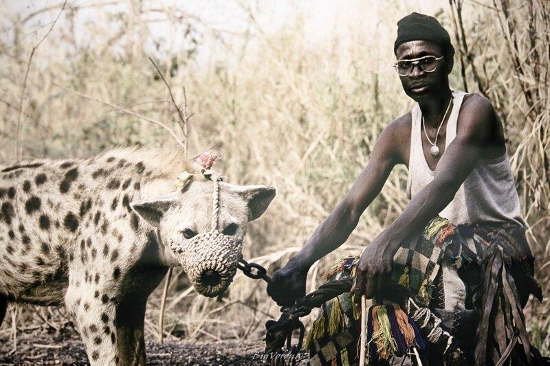 В-шестых им нужен просторный вольер и постоянные выгулы, для поддержания формы африка, гиены, животные, интересное, приручение, факты