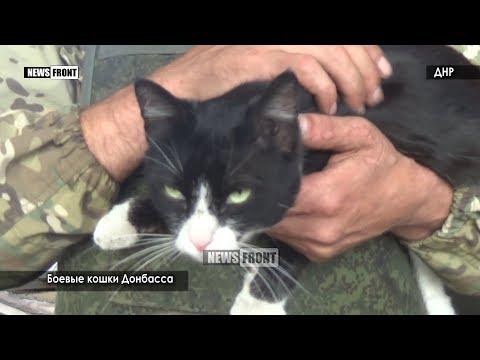 Боевые кошки Донбасса