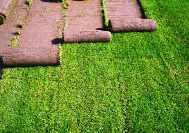 Как укладывать рулонный газон (44 фото): технология и описание процесса пошагово