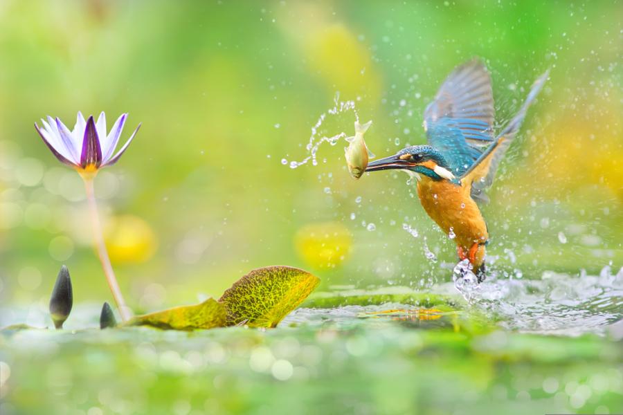 ~ A Decisive Moment ~, автор — FuYi Chen на 500px.com