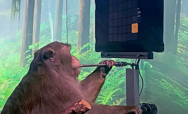 Обезьяну научили телепатией управлять видеоигрой, используя нейрочип. Видео