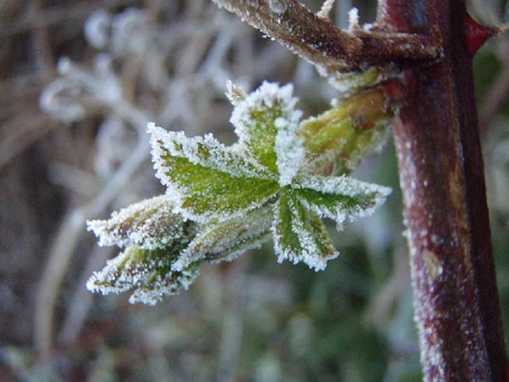 Хранение луковиц растений зимой защита от заморозков
