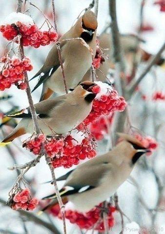 Дыхание мороза...Браво фотог…
