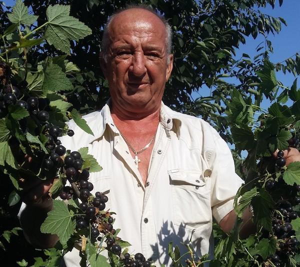 Советы по посадке, уходу и формированию кустов черной смородины от специалиста
