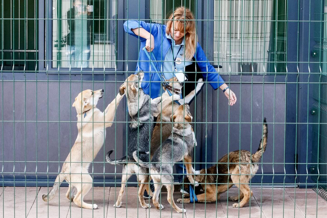 Нет зверя без закона: что изменит  первый в России закон об ответственном обращении с животными домашние животные