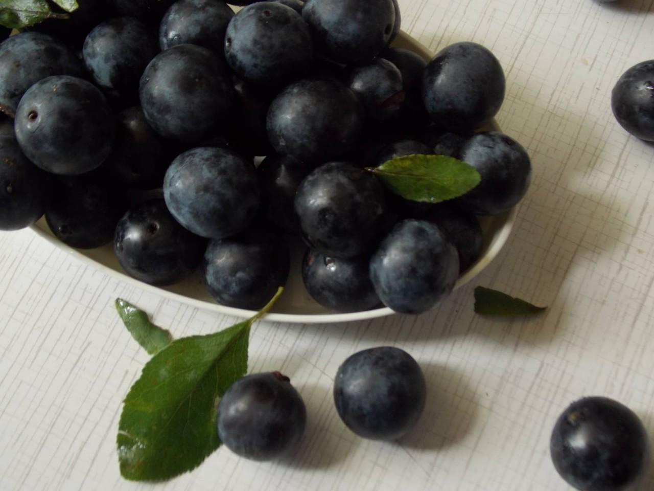tern-kak-olivki