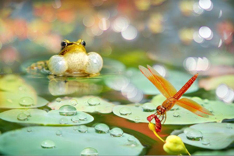 ~ Summer Morning ~, автор — FuYi Chen на 500px.com