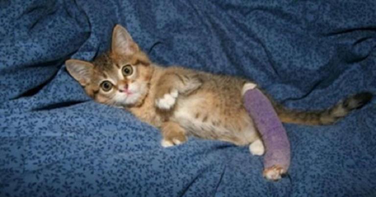 Маленький котенок с поломанной лапкой спас человека