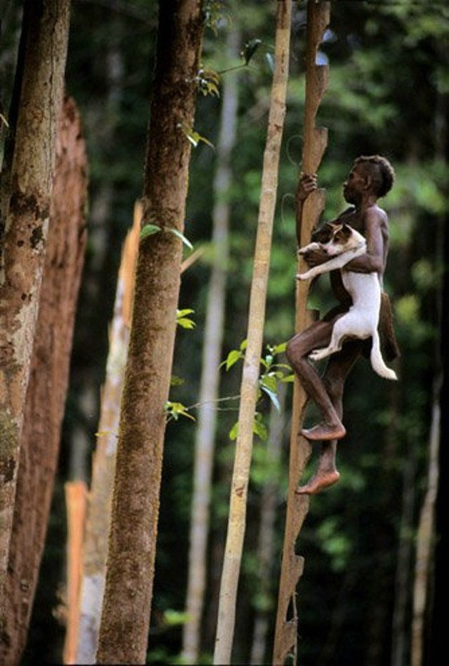 Городом дикий секс на дереве фото порно фильма
