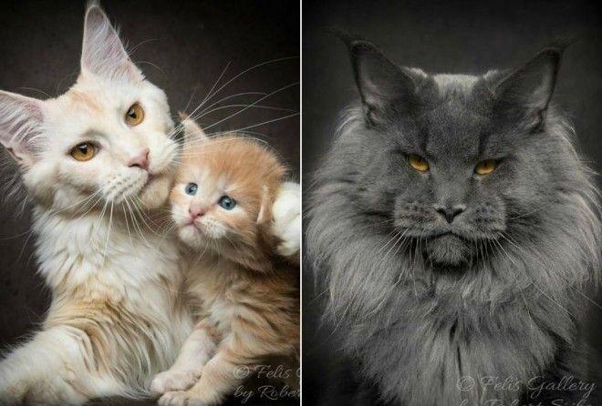 Роскошные кошки!