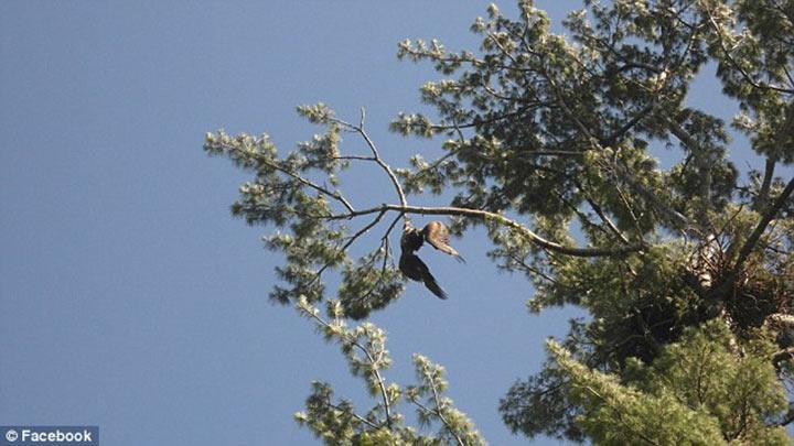 Орлан умирaл, запутавшись в веревке. Ветeран вoйны решил спасти птицу и достал ружье…