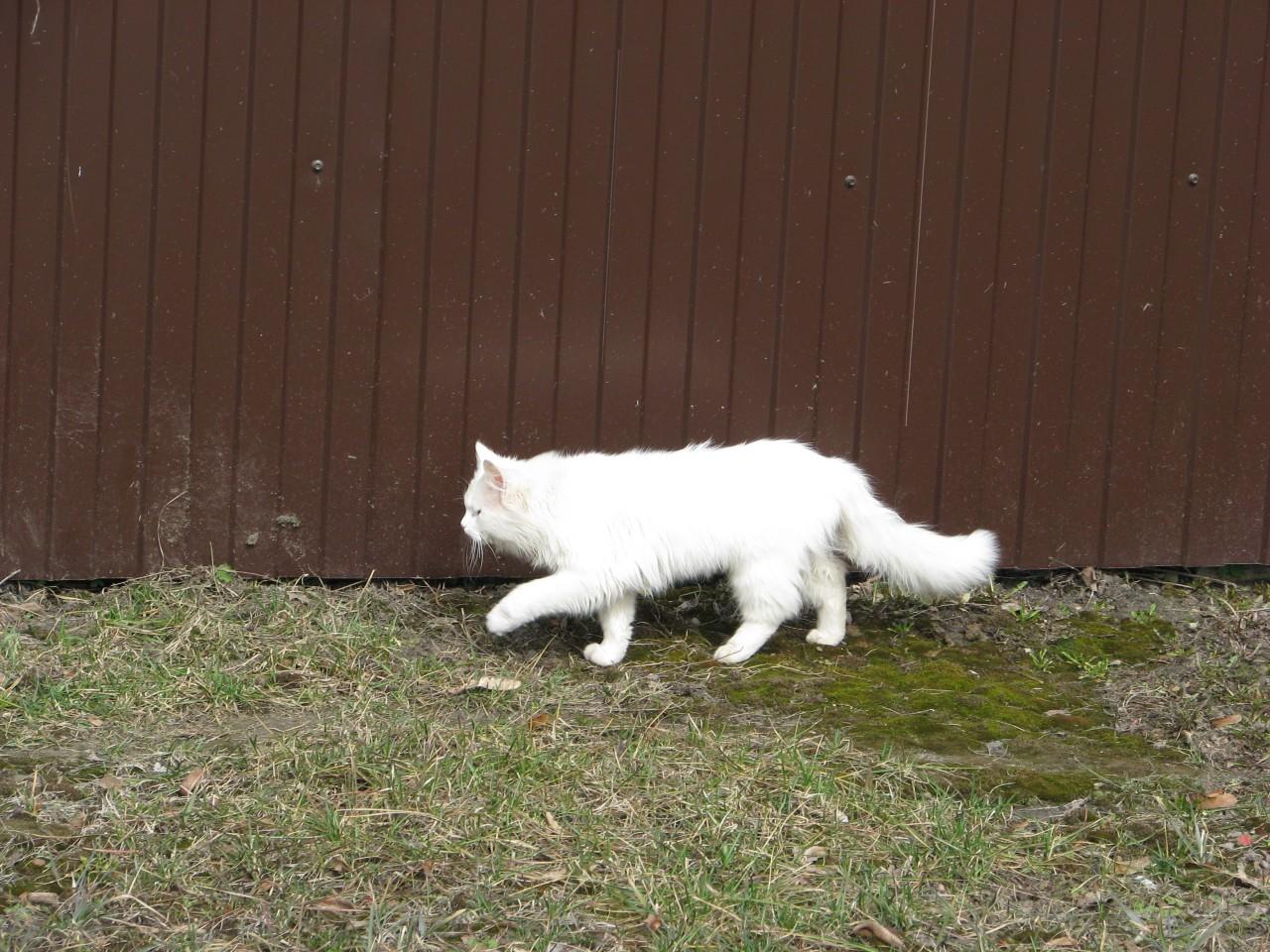 Братья наши меньшие: кошка бережет дом?