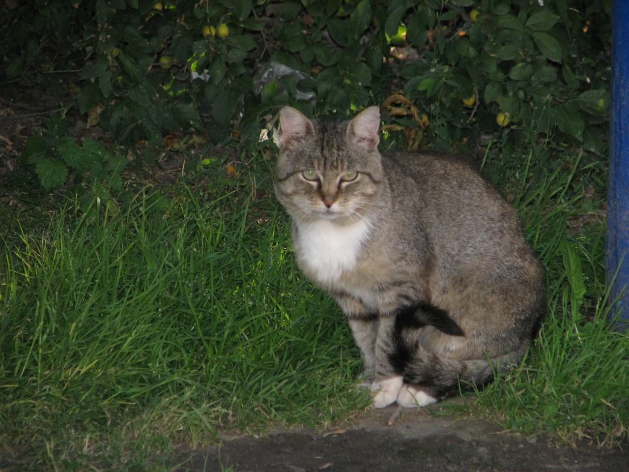 Братья наши меньшие: кот бродит в пустом парке