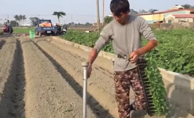 Как китайцы высаживают рассаду (видео)