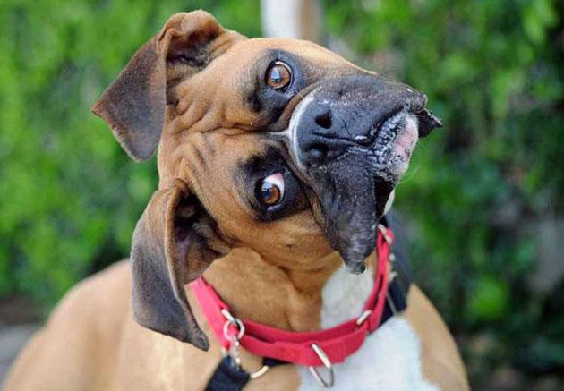 Валера - боксер и собака у него боксер...