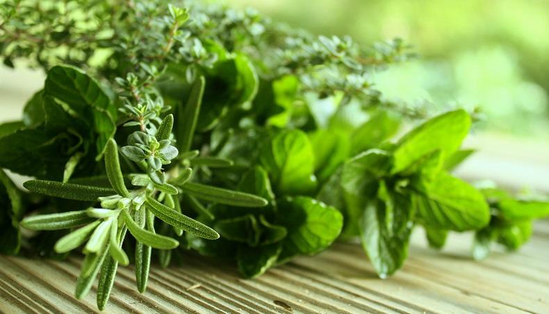9 лучших целебных трав для очищения почек