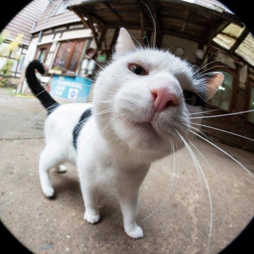 Смешные любопытные кошки, попавшие в объектив фотокамеры