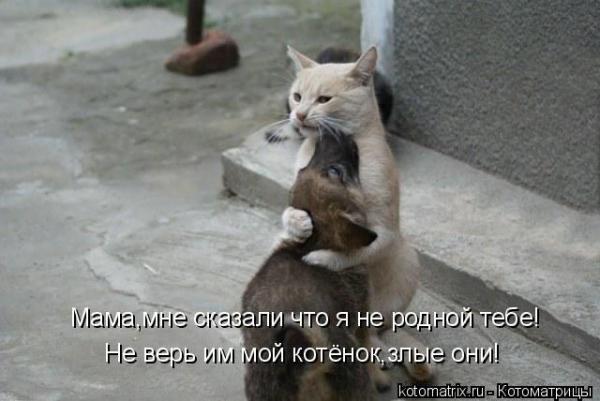 Был у кошки сын приёмный..