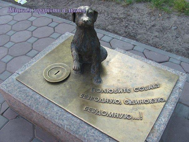 «Собака-копилка» собрала миллион рублей для бездомных животных