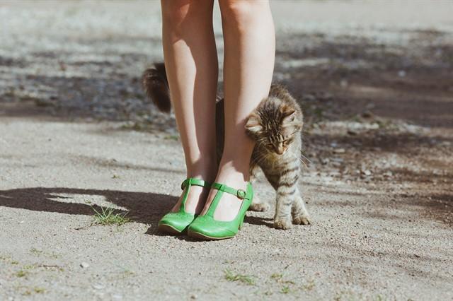 2. Зачем кошки трутся об людей? животные, коты, факты