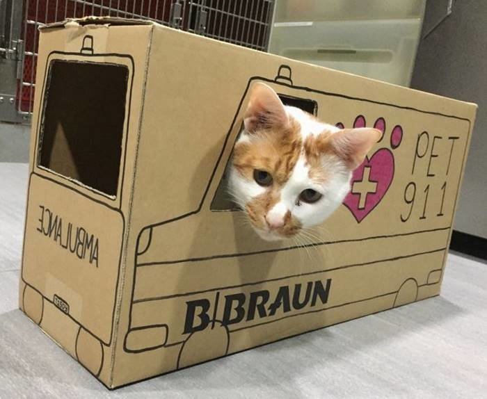 Ветеринары создают невероятные картонные домики для своего кота ветеринар, домики, животные, клиника, коты, милота, сингапур