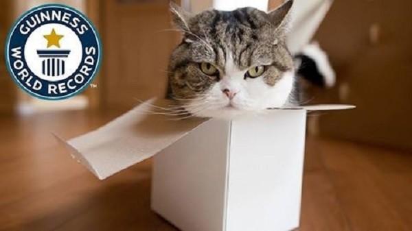 Самые необычные котики на планете