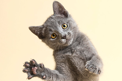 Доказано понимание кошками п…