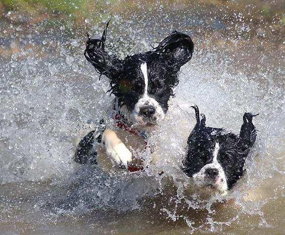 Безопасное купание собаки