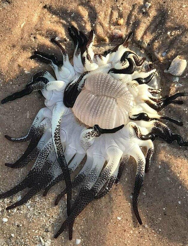 На берег Австралии выбросило инопланетно-подобное существо австралия, в мире, на берегу, пляж, существо