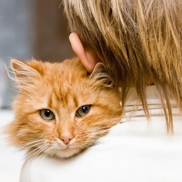 8 лайфхаков, которые облегчат жизнь любого кошатника