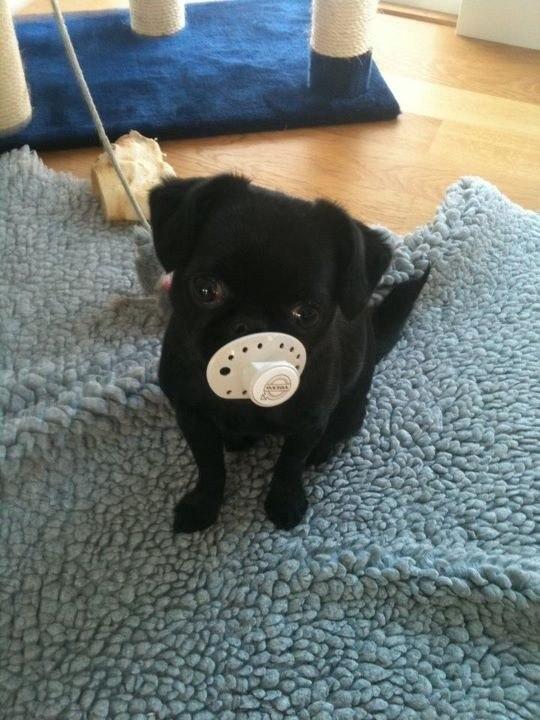 самые милые щеночки в мире (34)