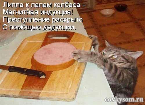 Кулинарные котоматрицы 34 (юмор)
