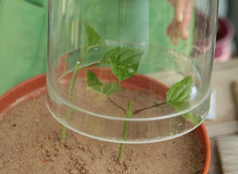 Подращивание садовых растений дома